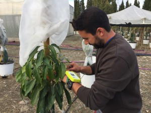 Richwater estudio agronómico/agronomic study: instalacion sensor tallo / Stem sensor installation