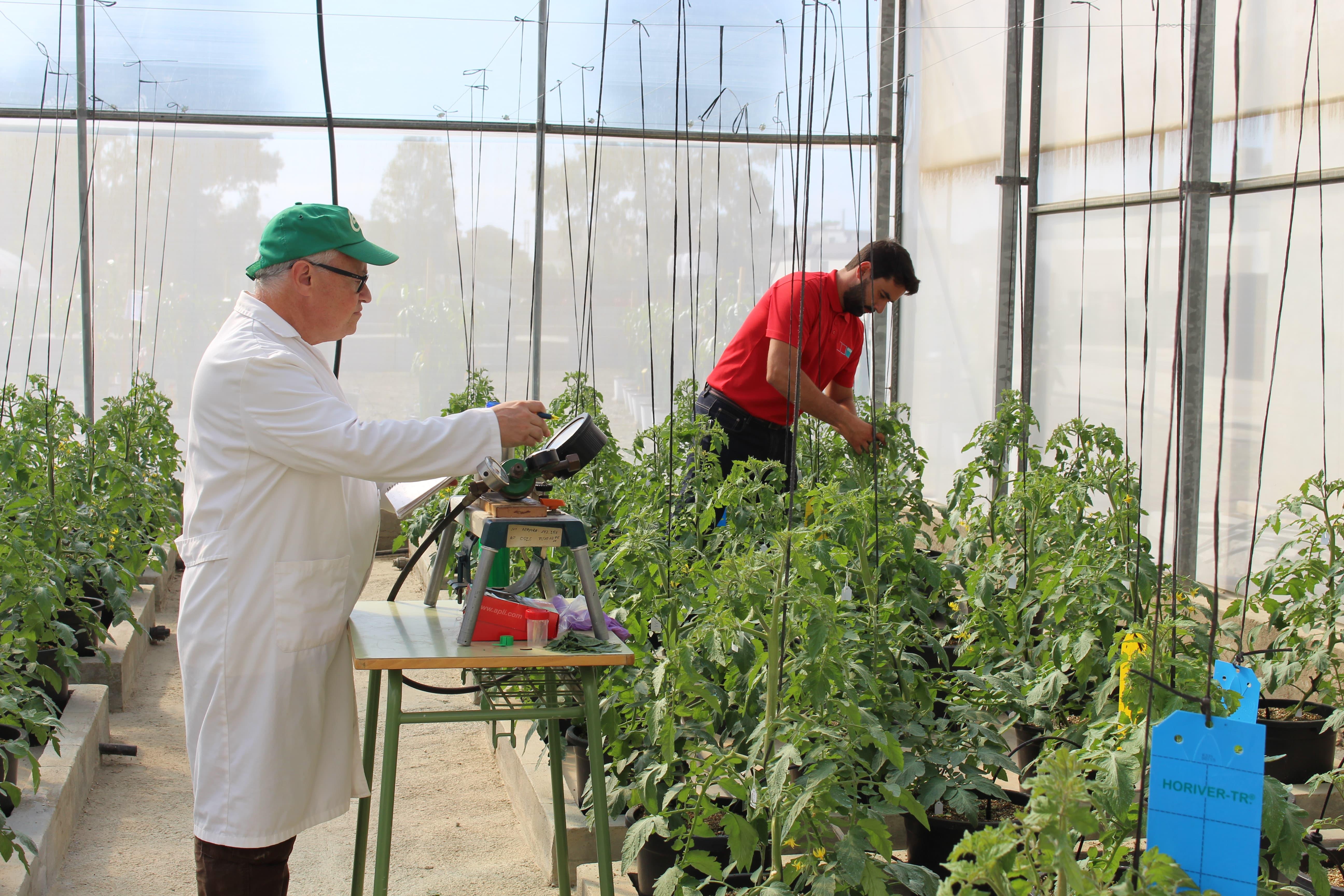 Estudio agronómico Richwater - cultivo tomate