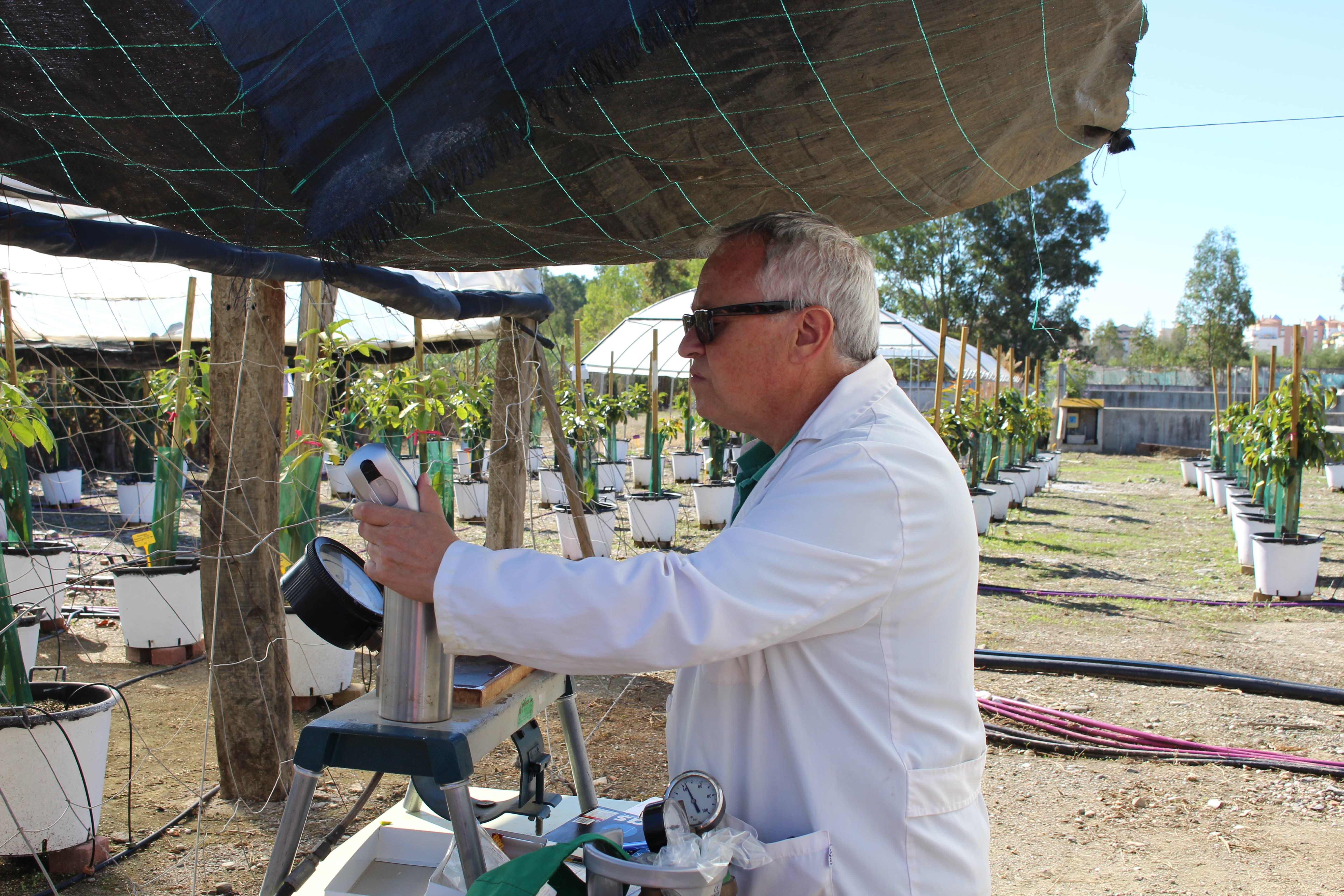 Estudio agronómico Richwater - presión hídrica hojas