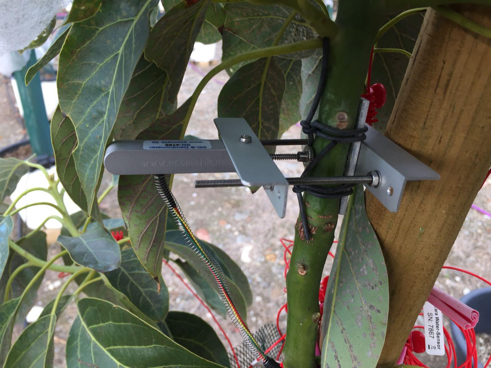 Richwater instalacion sensor tallo / Stem sensor installation